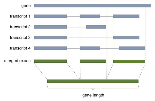 calculation of non-overlapping exons length as a gene length for calculating PFKM or TPM.